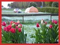 tulpenfestival Camping Craneburcht